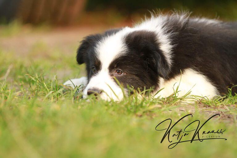 Hundeschule-GREH-3Welp_0E6A0004