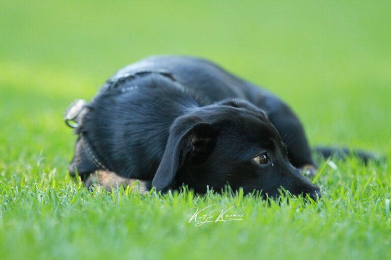 Hundeschule-GREH-3Welp_0E6A0005