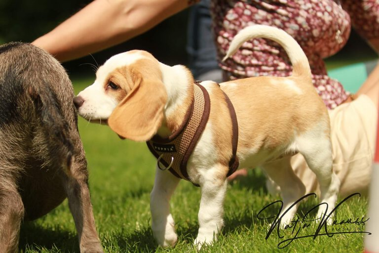 Hundeschule-GREH-3Welp_0E6A0007
