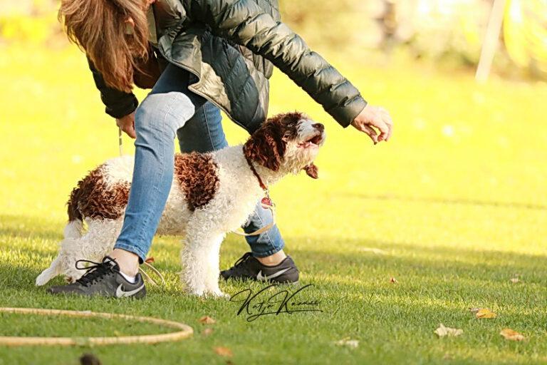 Hundeschule-GREH-41Dank_0E6A1071
