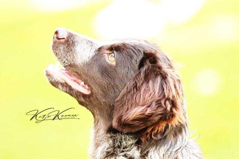 Hundeschule-GREH-41Dank_0E6A1468