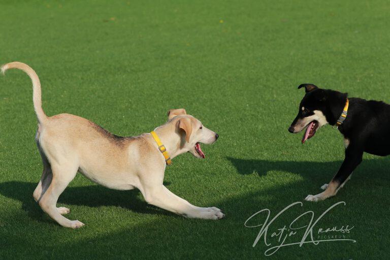 Hundeschule-GREH-41Dank_0E6A2587