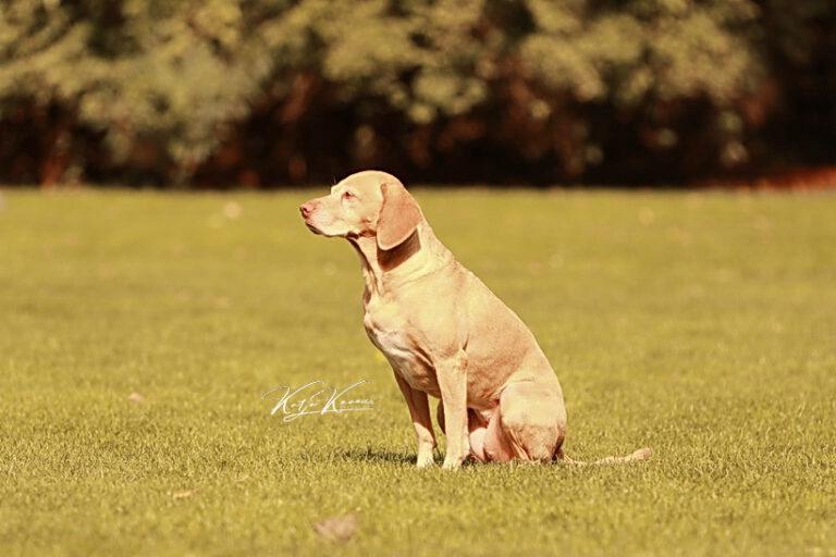 Hundeschule-GREH-41Dank_0E6A8342