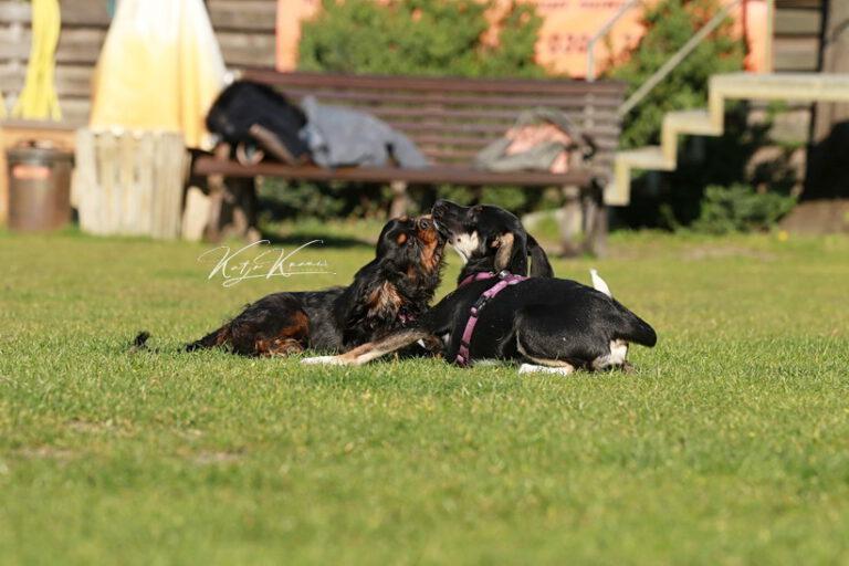 Hundeschule-GREH-41Dank_0P2A2589