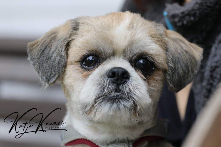 Hundeschule-GREH-42Apli_0E6A6470