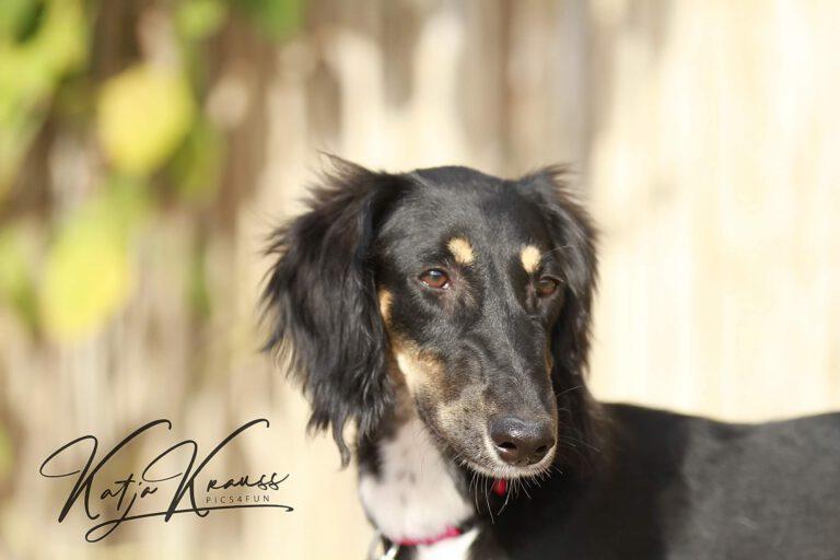 Hundeschule-GREH-42Apli_IMG_0043