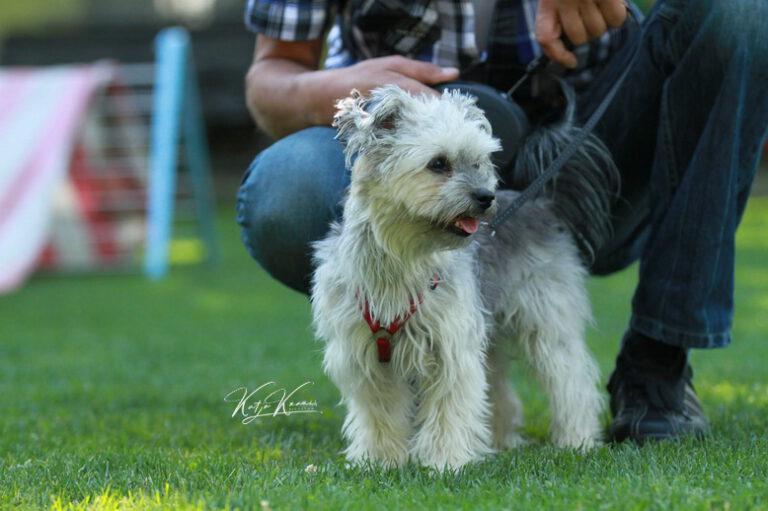 Hundeschule-GREH-42Apli_IMG_0293