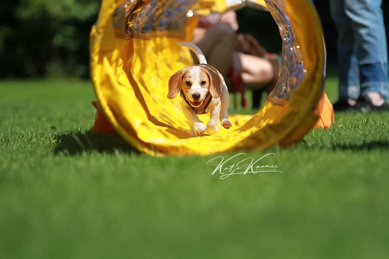 Gruppenaktivitäten wieder gestattet - Hundeschule GREH
