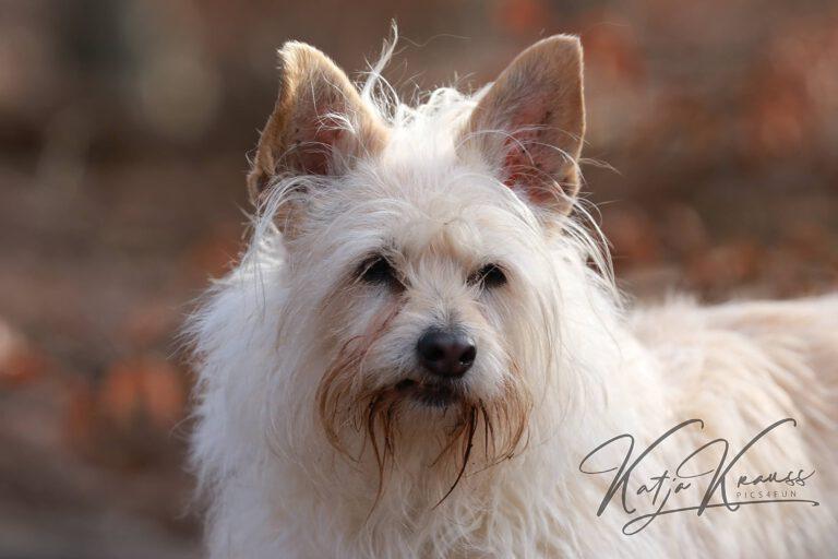 Newsletter - Hundeschule GREH