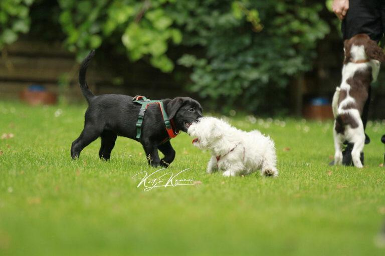 Hundeschule-GREH-43Anmeld_IMG_0060