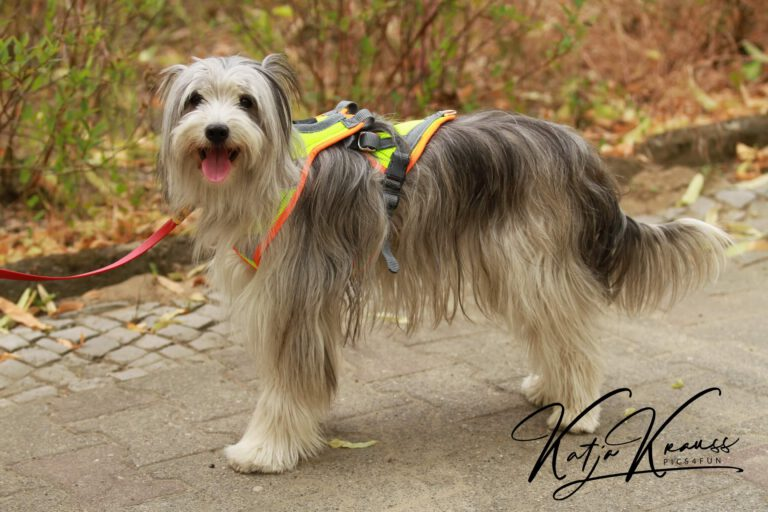 Hundeschule-GREH-44Anind_2015-06-17 Mantrailing 187