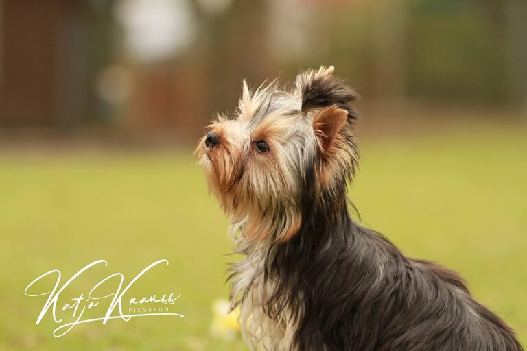Hundeschule-GREH-44Anind_IMG_0469
