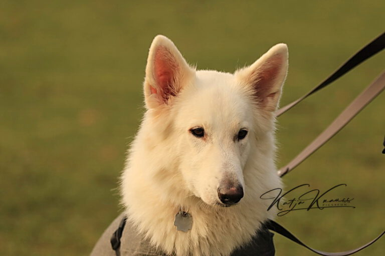 Hundeschule-GREH-45Kurs_0E6A0388