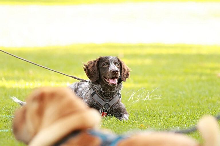 Hundeschule-GREH-45Kurs_0E6A1105