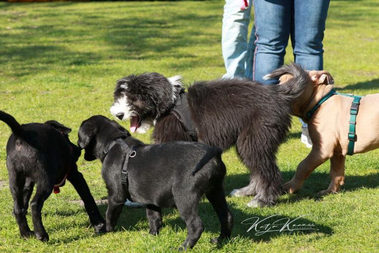 Hundeschule-GREH-45Kurs_0P2A0998