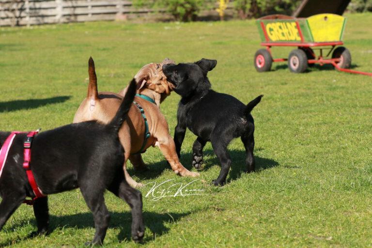 Hundeschule-GREH-45Kurs_0P2A1228
