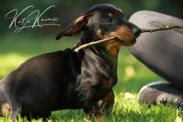 Hundeschule-GREH-45Kurs_IMG_0185