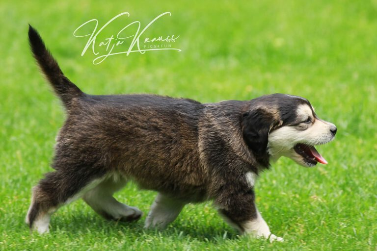 Hundeschule-GREH-46AGB_IMG_0011