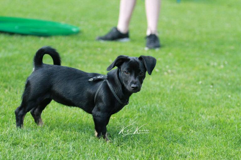 Hundeschule-GREH-46AGB_IMG_0025