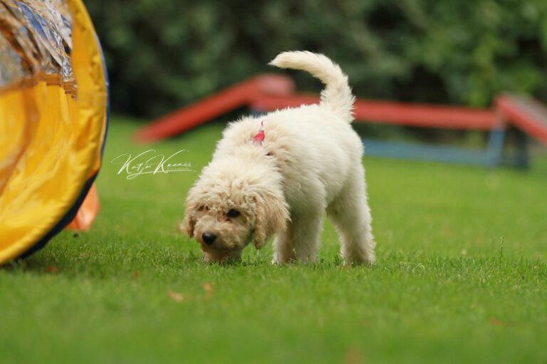 Hundeschule-GREH-46AGB_IMG_0113