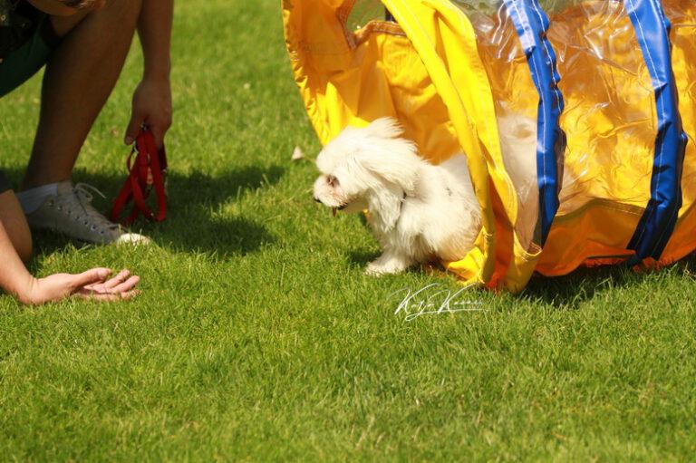 Hundeschule-GREH-46AGB_IMG_0823