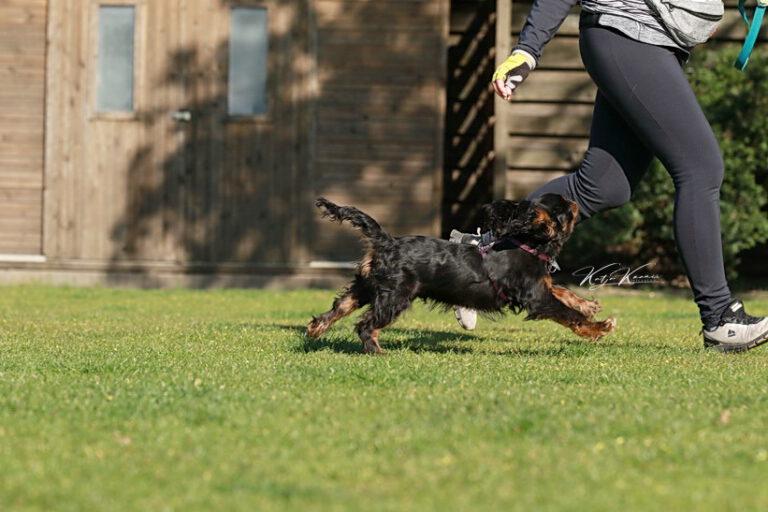 Hundeschule-GREH-47offS_0P2A1873