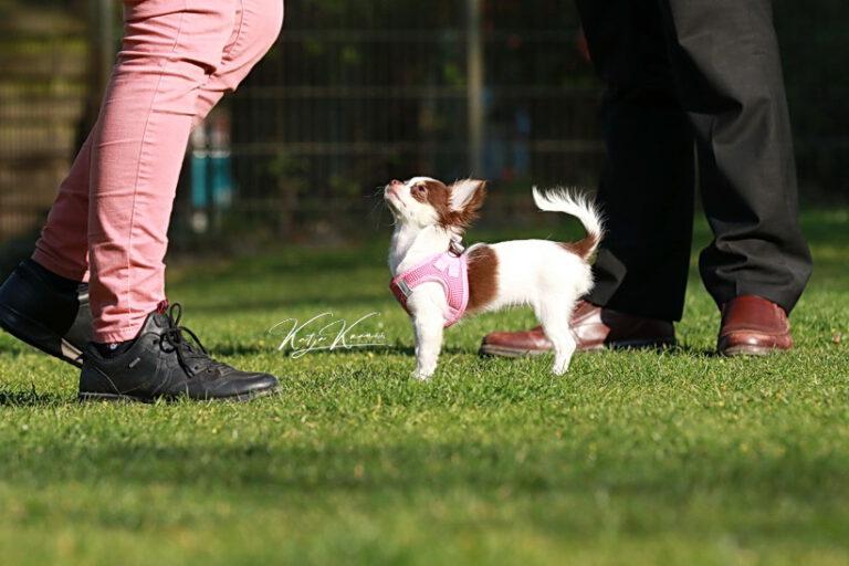 Hundeschule-GREH-47offS_0P2A2251