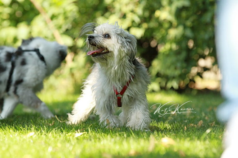 Hundeschule-GREH-47offS_IMG_0043