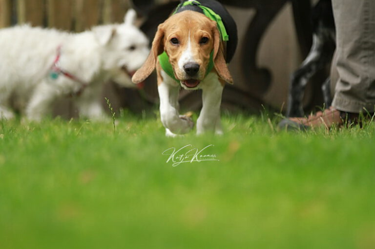 Hundeschule-GREH-47offS_IMG_0082