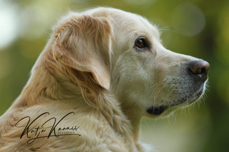 Hundeschule-GREH-47offS_IMG_0092