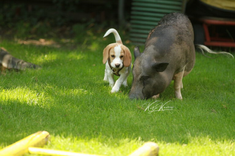 Hundeschule-GREH-47offS_IMG_0804