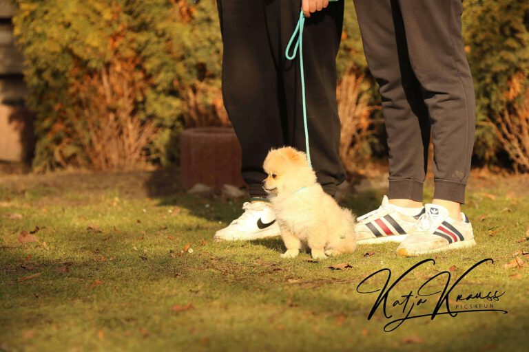 Hundeschule-GREH-4WelpM_0E6A0001