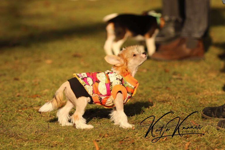 Hundeschule-GREH-4WelpM_0E6A0002