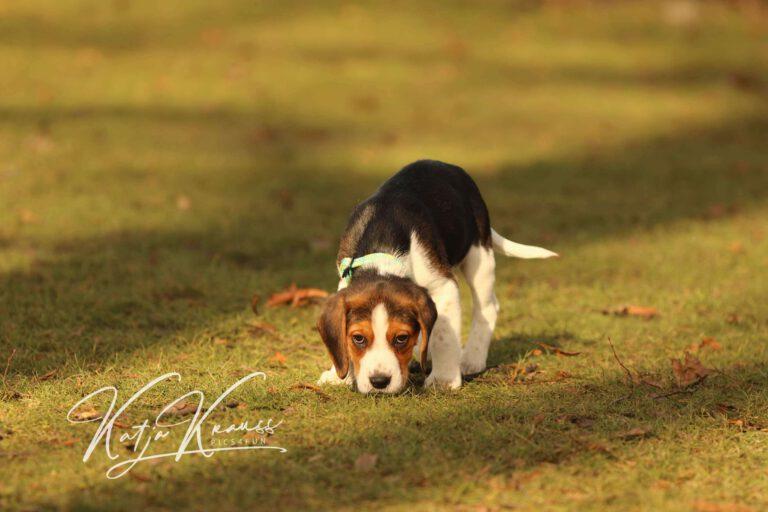 Hundeschule-GREH-4WelpM_0E6A0003