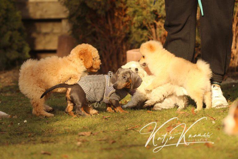 Hundeschule-GREH-4WelpM_0E6A0005