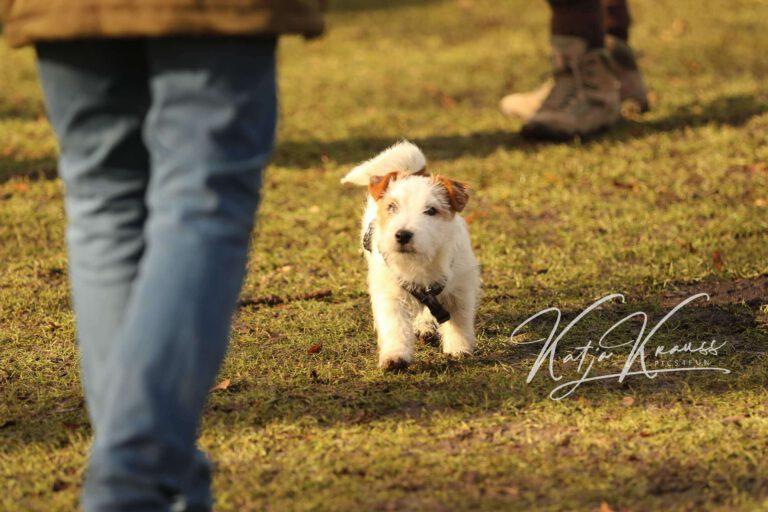 Hundeschule-GREH-4WelpM_0E6A0006