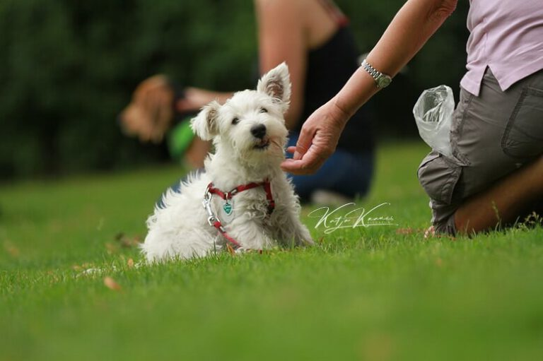 Hundeschule-GREH-4WelpM_0E6A0007