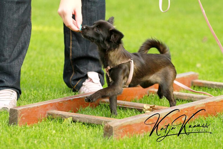 Hundeschule-GREH-4WelpM_0E6A0008