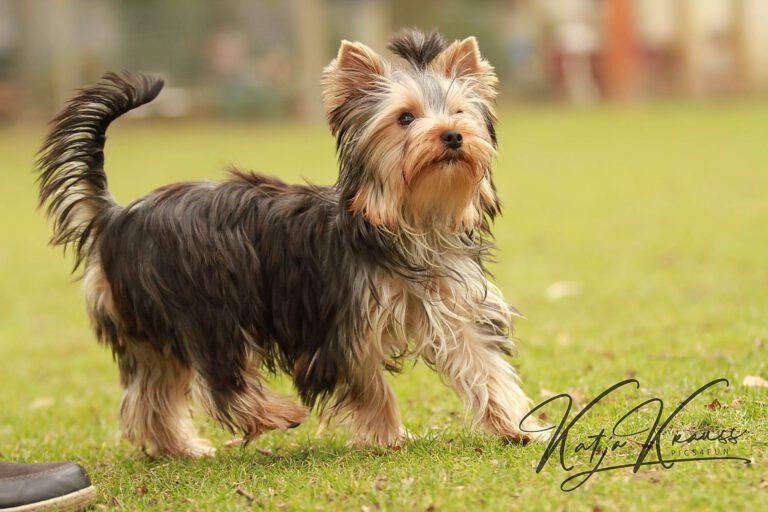 Hundeschule-GREH-4WelpM_IMG_0364
