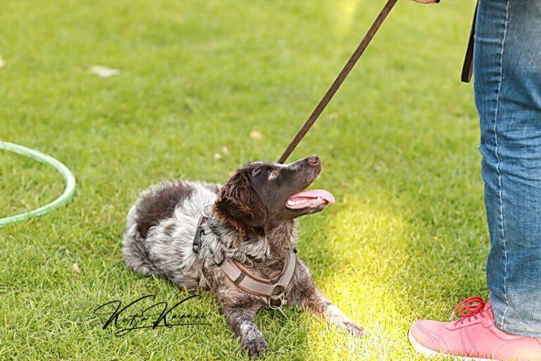 Hundeschule-GREH-5Jung_0E6A0001