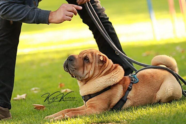 Hundeschule-GREH-5Jung_0E6A0002