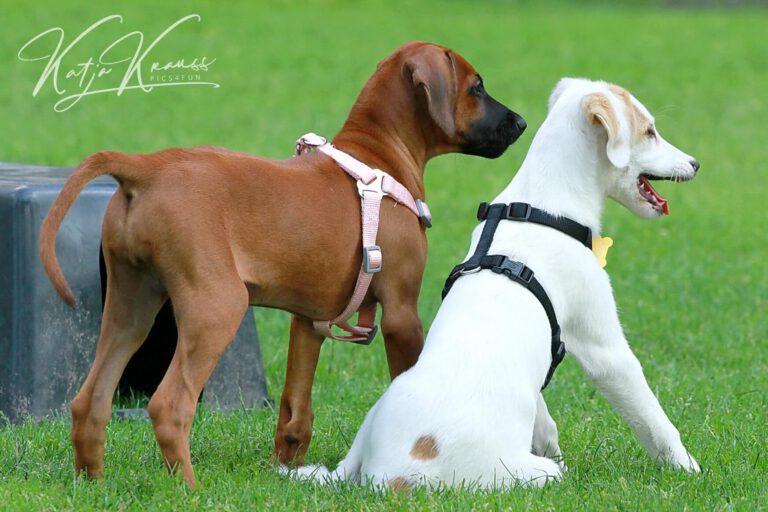 Hundeschule-GREH-5Jung_0E6A0006