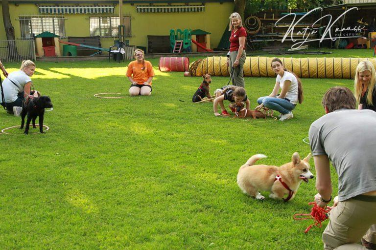 Hundeschule-GREH-5Jung_0E6A0008