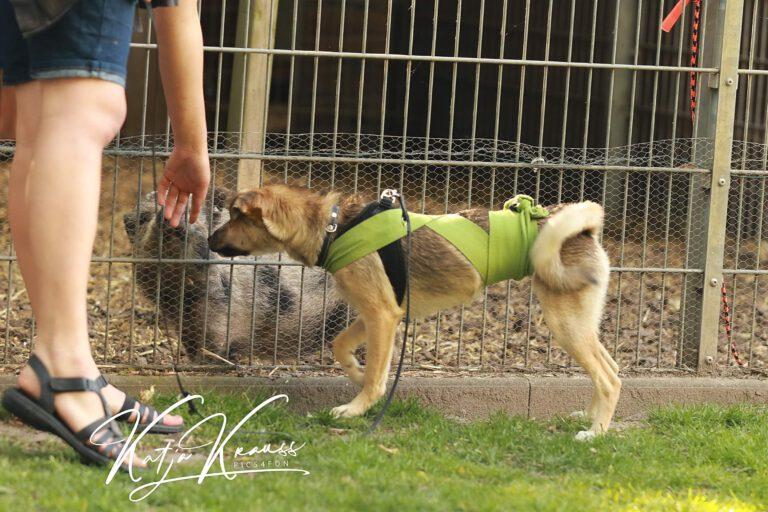 Hundeschule-GREH-5Jung_0E6A7321
