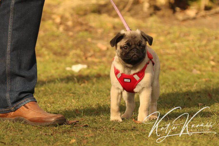 Hundeschule-GREH-6JungM_0E6A0002