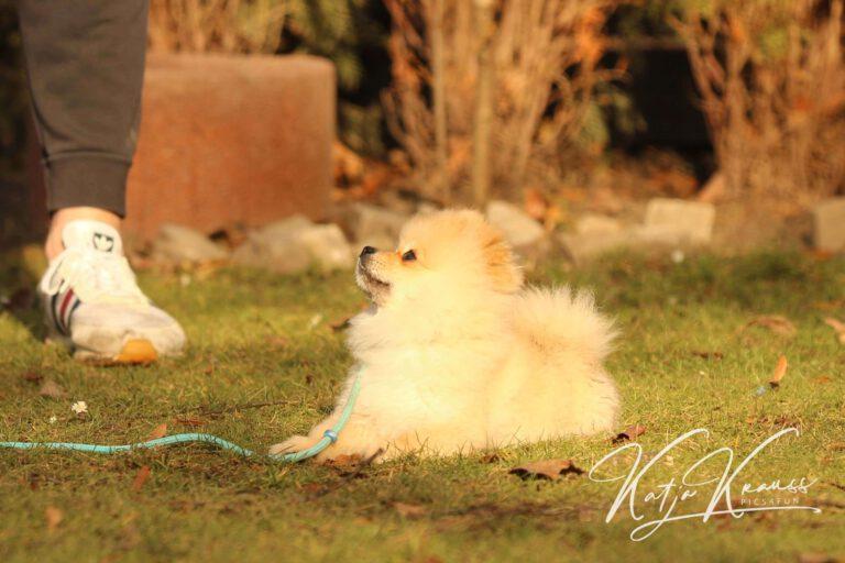 Hundeschule-GREH-6JungM_0E6A0003