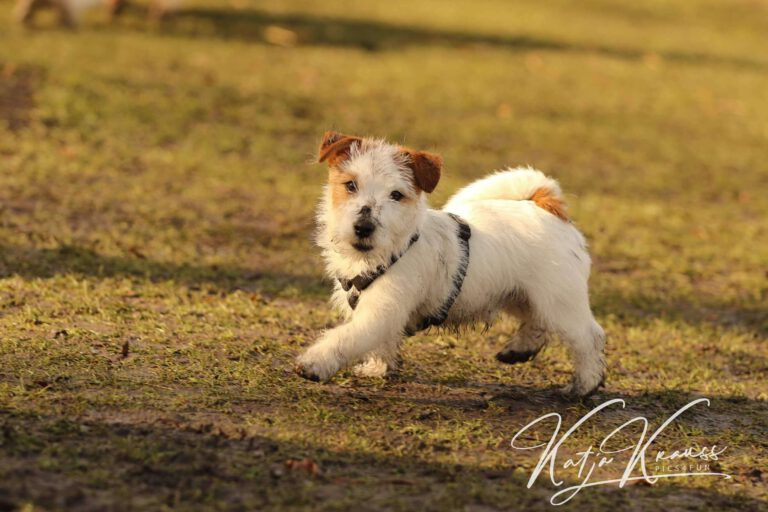 Hundeschule-GREH-6JungM_0E6A0004