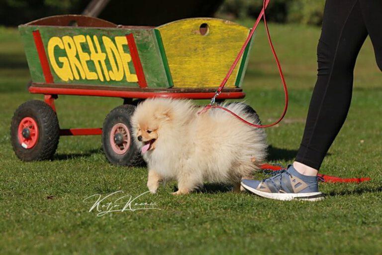 Hundeschule-GREH-6JungM_0E6A0005