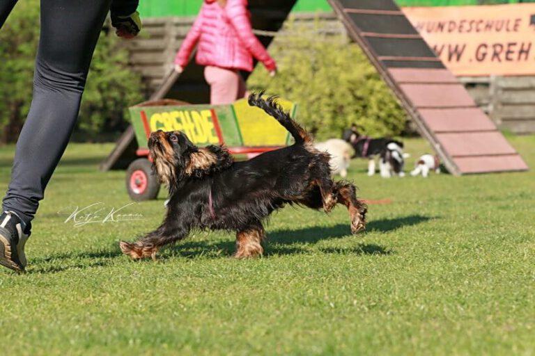 Hundeschule-GREH-6JungM_0E6A0006