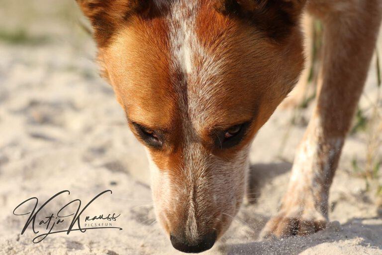 Hundeschule-GREH-7Schnü_0E6A0001